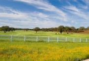 Texas Rural Lands: Trends and Conservation Implications for the 21st Century