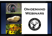 Youth On-demand Webinars