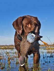 Bright Future for Texas Waterfowl Hunting