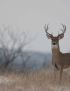 Things You May Have Heard about Chronic Wasting Disease
