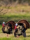 The South Texas Turkey Standard