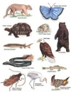 Citizens' Guide to the Endangered Species Act