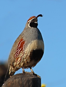 Proceedings of the 2008 Texas Quail Study Group