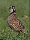 Proceedings of the 2009 Texas Quail Study Group