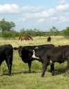 Private Lands Public Benefits: Incentives for the Stewardship of Texas Agricultural Lands