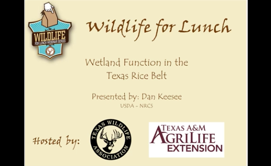 Wetland Function in the Texas Rice Belt